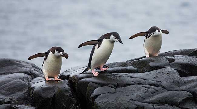 6 bản cập nhật thuật toán Penguin là gì?